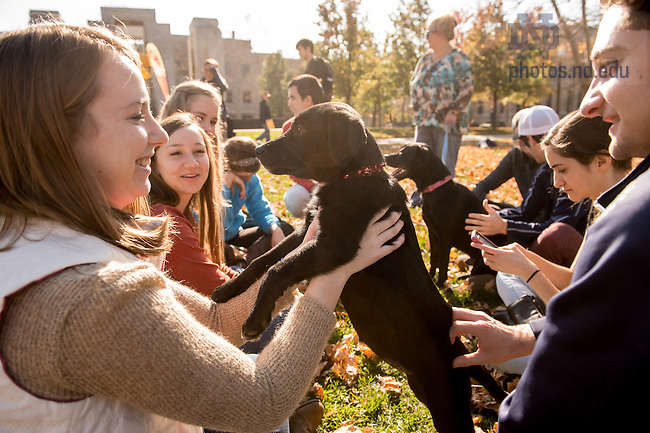 """Nov. 10, 2015; Caroline McKay plays with Bonnie, a puppy from Heartland Small Animal Rescue, at """"Dogs and Donuts,"""" a Student Union Board event aimed at giving students a warm fuzzy study break, and perhaps a reminder of pets at home. """"I face time with my dog a lot,"""" said Caroline. (Photo by Matt Cashore/University of Notre Dame)"""