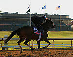 Sistercharlie, trained by trainer Chad C. Brown, exercises in preparation for the Breeders' Cup Filly & Mare Turf at Keeneland Racetrack in Lexington, Kentucky on November 4, 2020.