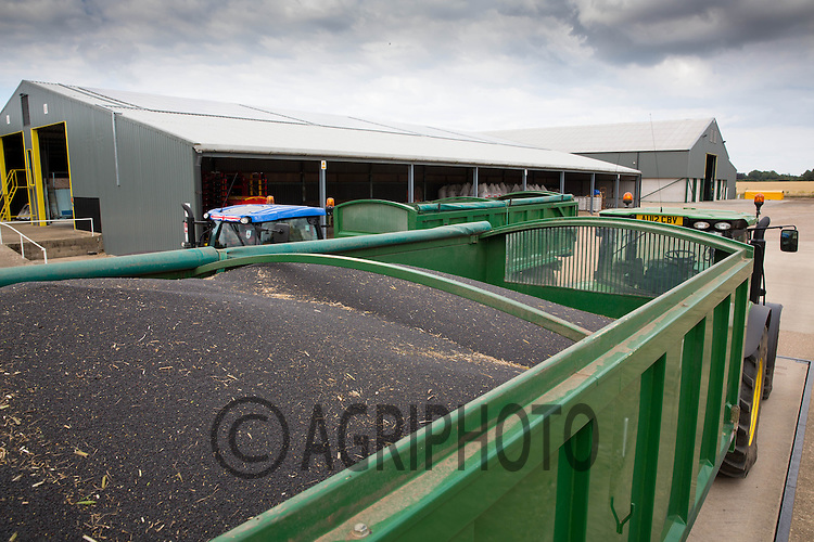Trailer load of oilseed rape on a farm weigh bridge before going into on farm storage<br /> Picture Tim Scrivener 07850 303986
