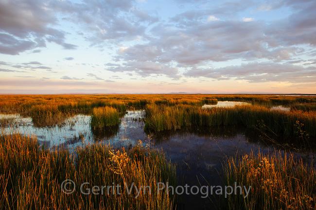 Wetland in central Oregon's Malheur National Wildlife Refuge. Malheur County, Oregon. September.