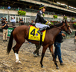 OCT 03, 2021: HOT FUDGE post parade in  Gr.1  Frizette Stakes, for 2 year old fillies, at Belmont Park, Elmont, NY.  Sue Kawczynski/Eclipse Sportswire/CSM