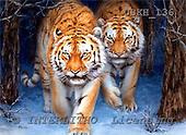 Kayomi, REALISTIC ANIMALS, paintings, tigers, SiberianForest_M, USKH136,#A# realistische Tiere, realista, illustrations, pinturas