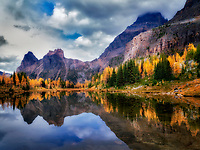 Lake reflection larch in fall color and mountains. Yoho National Park, Opabin Plateau, British Columbia, Canada
