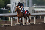 DEC 12,2015:  ,trained by ,exercises in preparation for the Hong Kong  at Sha Tin in New Territories,Hong Kong. Kazushi Ishida/ESW/CSM