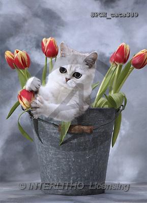Xavier, ANIMALS, cats, photos(SPCHcats389,#A#) Katzen, gatos