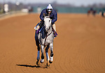 November 2, 2020: Rushie, trained by trainer Michael W. McCarthy, exercises in preparation for the Breeders' Cup Dirt Mile at Keeneland Racetrack in Lexington, Kentucky on November 2, 2020. Alex Evers/Eclipse Sportswire/Breeders Cup