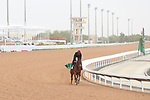 RIYADH, SA February 19 2021: MILITARY LAW (GB) Track work from King Abddulaziz Racetrack, Riyadh, Saudi Arabia. Shamela Hanley/Eclipse Sportswire/CSM