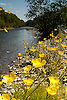 The Ystwyth River on a hot summers day with beautifull flowers adorning the banks. This spot is about 10 miles inland from Aberystwyth.<br /> <br /> Stock Photo by Paddy Bergin