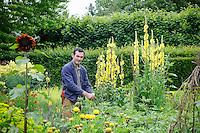 Troy Scott-Smith stakes verbascum plants