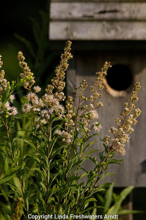 White Meadowsweet and Bird House