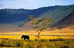 Ngorongoro, Tanzania, October 2006.