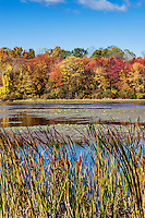 Autumn pond and foliage, Connecticut,  USA