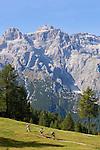 Italy, South Tyrol, Alto Adige, Dolomites, Moso: hiking region Prati di Croda Rossa with hikers and Lastron dei Scarperi mountain