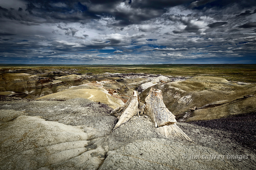 A petrified tree stump overlooks the badlands of the Fossil Forest in New Mexico's San Juan Basin