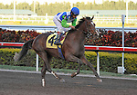31 January 2009: Nicanor, with jockey Edgar Prado in the saddle, runs in his first race and finishes a disappointing 11th in a maiden race at Gulfstream Park in Hallandale, Florida.