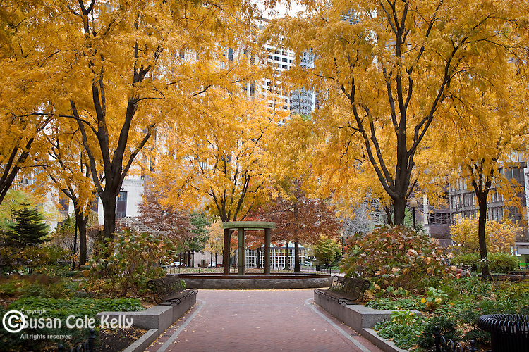 Fall foliage in Norman B. Leventhal Park in Post Office Square, Boston, MA