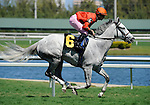 Tapitsfly (no. 6), ridden by Julien Leparoux and trained by Dale Romans, wins the 5th race on April 2, 2011 at Gulfstream Park in Hallandale Beach, Florida.  (Bob Mayberger/Eclipse Sportswire)