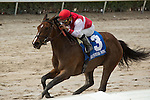 HALLANDALE BEACH, FL- APRIL 02: #3 Go Maggie Go with jockey Luis Saez up wins the Gulfstream Oaks at Gulfstream Park on April 02, 2016 in Hallandale Beach, Florida. (Photo by Arron Haggart/Eclipse Sportswire/Getty Images)
