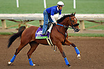 ARCADIA, CA - NOV 01: Vyjack, owned by Pick Six Racing and trained by Philip D'Amato, exercises in preparation for the Breeders' Cup Mile at Santa Anita Park on November 1, 2016 in Arcadia, California. (Photo by Scott Serio/Eclipse Sportswire/Breeders Cup)