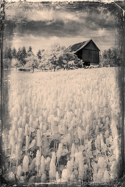 Infrared image of old barn with vintage tintype effect