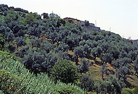 Tivoli: Villa D'Este--view of olive groves, hillside, southwest of villa. Photo '83.