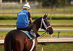 LOUISVILLE, KY - APRIL 19: Penwith (Bernardini x Composure, by Touch Gold) on track at Churchill Downs, Louisville, KY with exercise rider Miguel Jaime. She is nominated to the G1 LaTroienne Stakes to be run on Kentucky Oaks Day (May 6, 2016.) Owner Godolphin Racing LLC, trainer Kieran McLaughlin<br />  (Photo by Mary M. Meek/Eclipse Sportswire/Getty Images)