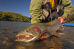 A nice rainbow trout from Alaska.