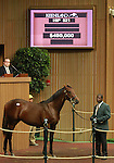 September 10, 2014: Hip #521 War Front - Chatham colt consigned by Stone Farm, sold for $490,000 at the Keeneland September Yearling Sale.   Candice Chavez/ESW/CSM