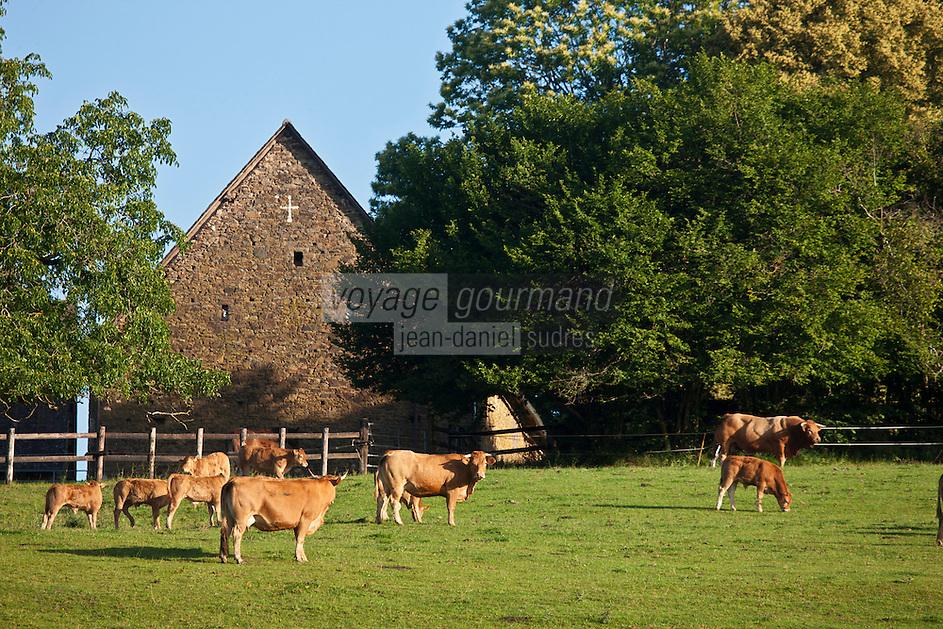 Europe/France/Limousin/19/Corrèze/Env d'Uzerche: Elevage de bovins de race Limousine