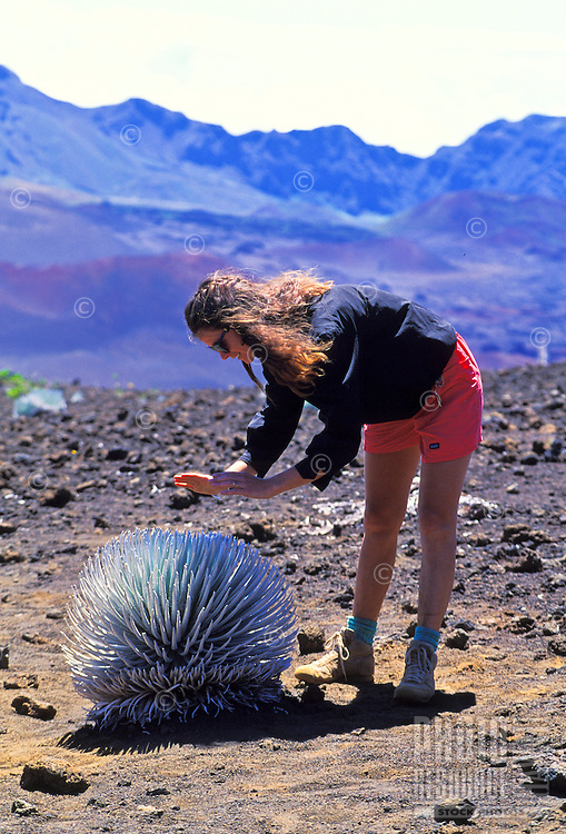 Woman hiker standing over rare silverward plant in Haleakala Crater. Island of Maui.