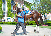 Somali Lemonade strides through the paddock before the Sands Point.