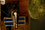 ARCADIA, CA  OCTOBER 25: Breeders' Cup Distaff entrant Paradise Woods, trained by John A. Shirreffs, relaxes in her stall days before the Breeders' Cup World Championships at Santa Anita Park in Arcadia, California on October 25, 2019.  (Photo by Casey Phillips/Eclipse Sportswire/CSM)