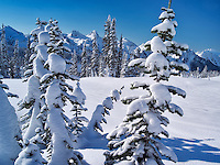 Snow covered trees and Tatoosh Mountains. Mt. Rainier National Park, Washington