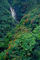 Nanue Falls with tulip trees<br />   and royal palms<br /> Hamakua Coast<br /> Island of Hawaii,  Hawaii