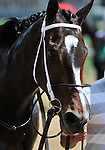 10 April 30: Reigning Horse of the Year Rachel Alexandra (no. 4), ridden by Calvin Borel and trained by Steve Asmussen, comes in second to Unrivaled Belle (no. 5) in the grade 2 La Troienne Stakes for fillies and mares three years old and upward at Churchill Downs in Louisville, Kentucky.
