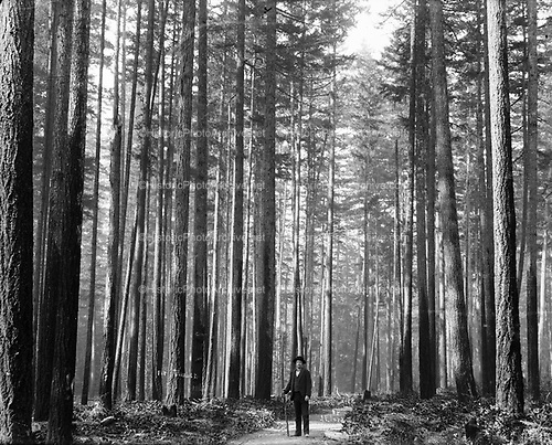 "Photographer J. F. Ford in old growth timber.  Photographer's caption: ""Fir Timber, Seattle W. By J. F. Ford"""