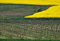 Europe/France/Aquitaine/47/Lot-et-Garonne/Env de Duras : Vignoble Côtes de Duras