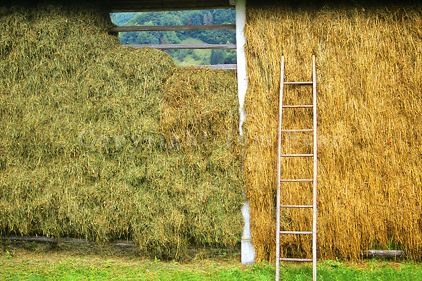 Hay drying in Slovenian style hayrack in village of Srednjavas in the Julian Alps in the Bohinj area of Slovenia, AGPix_0548.