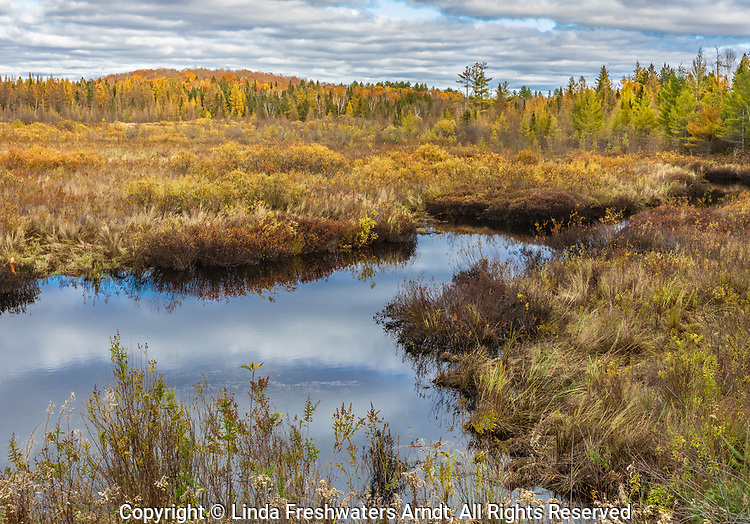 An autumn bog in the Chequamegon National Forest in northern Wisconsin.