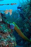 Reef scenic Cuba, yellow tube sponge, azure vase sponge