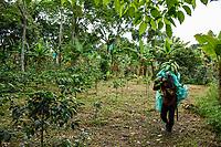 ARMENIA - COLOMBIA, 26-05-2021: Diego carga entre dos a cuatro racimos de plátanos, dependiendo del numero de dedos que tenga el racimo, el peso está entre 10 a 20 kilos. A más de un mes del inicio del Paro Nacional, los campesinos han tenido que reinventar la forma para mantener sus cultivos y criaderos activos para minimizar las pérdidas por los bloqueos que aún se mantienen en las vías. Según cifras del Ministerio de Hacienda, las pérdidas diarias están en un monto de $480.000 millones de pesos colombianos, lo cual sumando la totalidad de los días del Paro Nacional, suman un total de $10,8 billones de pesos colombianos. / Diego carries between two to four bunches of bananas, depending on the number of fingers the bunch has, the weight is between 10 to 20 kilos. More than a month after the beginning of the National Strike, the farmers have had to reinvent the way to keep their crops and farms active to minimize losses due to the blockades that are still being maintained on the roads. According to figures from the Ministry of Finance, daily losses are in the amount of $480,000 million Colombian pesos, which adding the total number of days of the National Strike, add up to a total of $10.8 billion Colombian pesos. Photo: VizzorImage / Santiago Castro / Cont