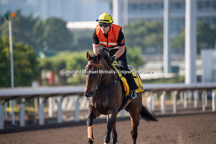 SHA TIN, HONG KONG – December 4: In Her Time at trackwork on December 4 at Sha Tin Race Course in Hong Kong before starting in the Longines Hong Kong Sprint. Michael McInally/Eclipse Sportswire/CSM