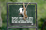 Toque Macaque Playing On Garbage Sign