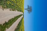 Europa, DEU, Deutschland, Rheinland-Pfalz, Pellenz, Kruft , Fruehling, Rapsbluete, Baum, Natur, Umwelt, Landschaft, Jahreszeiten, Stimmungen, Landschaftsfotografie, Landschaften, Landschaftsphoto, Landschaftsphotographie, Wetter, Wetterelemente, Wetterlage, Wetterkunde, Witterung, Witterungsbedingungen, Wettererscheinungen, Meteorologie, Wettervorhersage, <br /> <br /> [Fuer die Nutzung gelten die jeweils gueltigen Allgemeinen Liefer-und Geschaeftsbedingungen. Nutzung nur gegen Verwendungsmeldung und Nachweis. Download der AGB unter http://www.image-box.com oder werden auf Anfrage zugesendet. Freigabe ist vorher erforderlich. Jede Nutzung des Fotos ist honorarpflichtig gemaess derzeit gueltiger MFM Liste - Kontakt, Uwe Schmid-Fotografie, Duisburg, Tel. (+49).2065.677997, ..archiv@image-box.com, www.image-box.com]