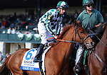 LEXINGTON, KY - October 11, 2017. #6 Cash Out and jockey Florent Geroux before finishing 3rd in the JPMorgan Chase Jessamine Grade 3 $150,000 at Keeneland Race Course.  Lexington, Kentucky. (Photo by Candice Chavez/Eclipse Sportswire/Getty Images)