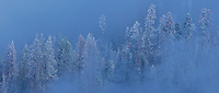 937000032 panoramic view -  snow covered fir trees surrounded by dense winter fog in hayden valley yellowstone national park wyoming