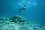 Nager avec les tortues vertes sur la plage de N Gouja est un des plus grands plaisirs qu offre le lagon.