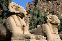 Statues of sphinxes at the entrance of Karnak Temple, Luxor, Egypt.