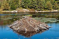 Beaver lodge, Eagle Lake, Acadia NP, Maine, ME, USA