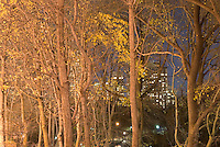 Illuminated Buildings on Manhattan's Upper West Side viewed thru trees and Autumn foliage in Central Park at night, New York City, New York State, USA